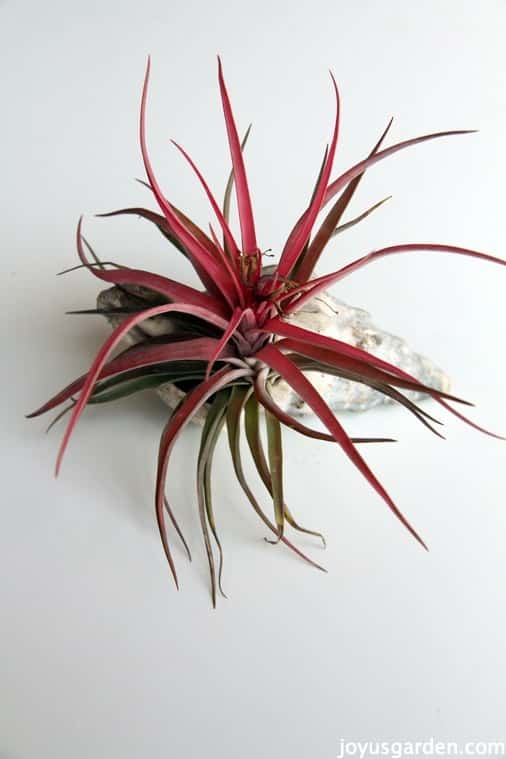 More ways to style air plants