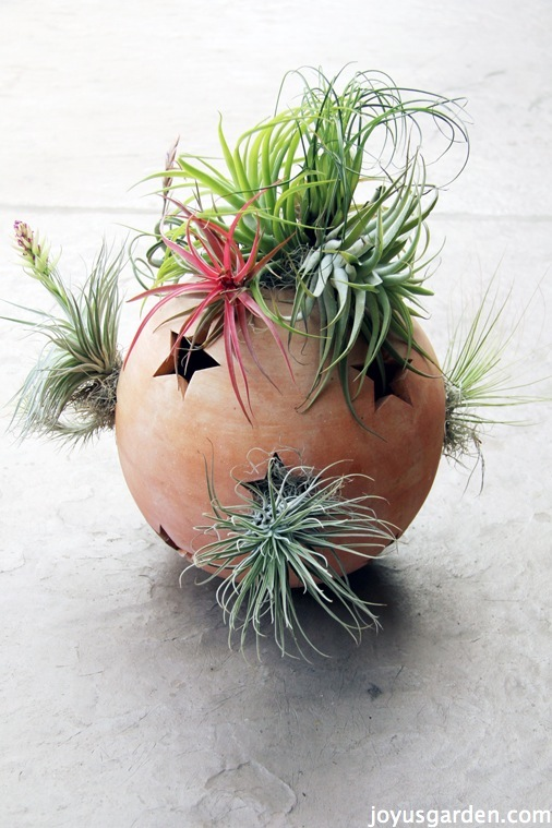Finished garden art with air plants