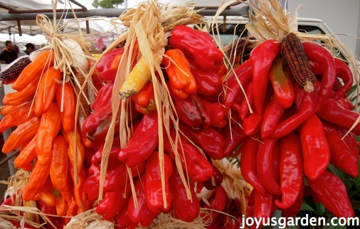 Ristas, or strings of brightly colored chiles