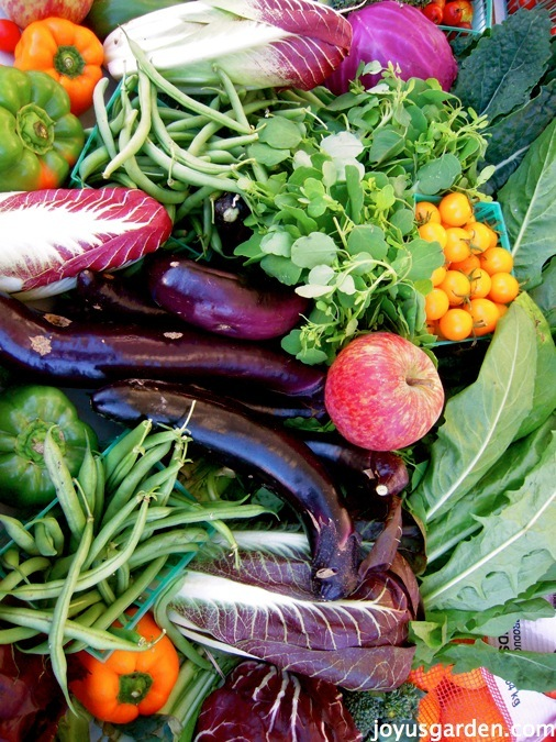 A gorgeous assortment of colorful produce