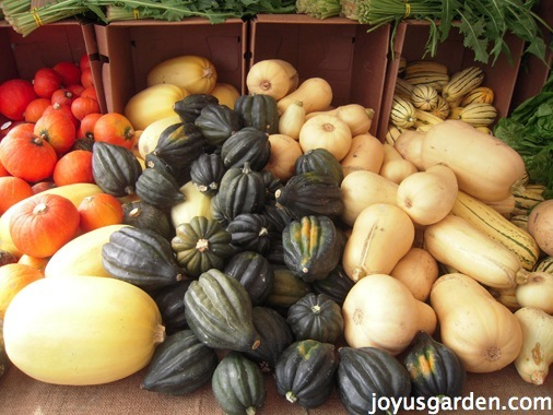 A selection of winter squashes