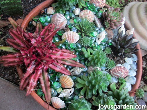 Cryptanthus: My Latest Plant Crush