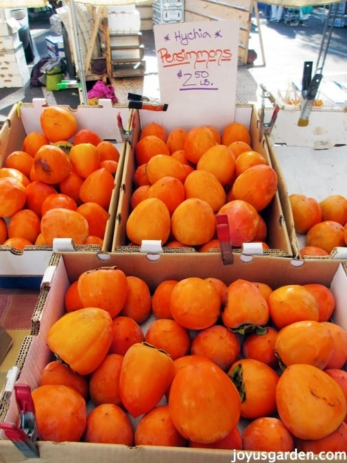 Boxes of bright persimmons