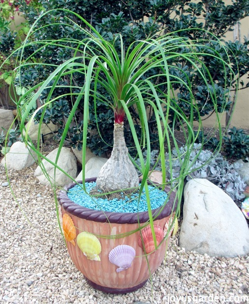 Completely repainted terracotta pot with a plant
