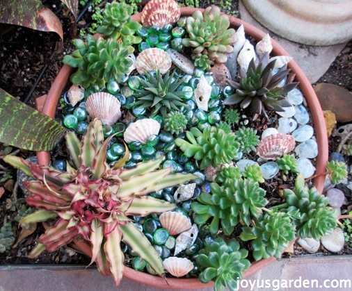 The Makeover Of My Succulent Bowl Makeover