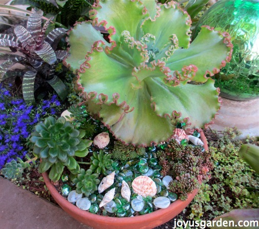 Succulent plants before they critters got it