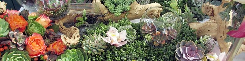 Stunning succulent garden
