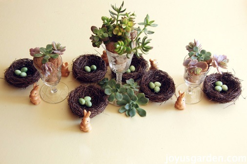 Succulents and bunnies for spring