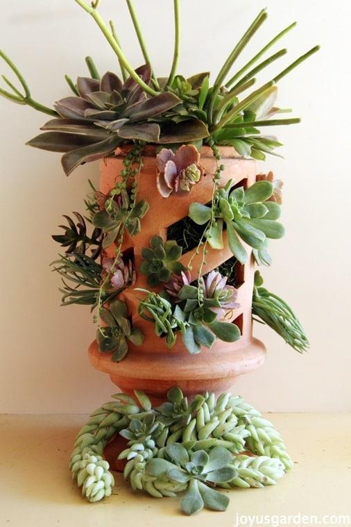 A Lantern Posing As A Succulent Arrangement