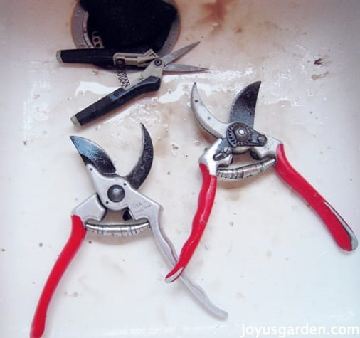 A Quick Easy Way To Clean Sharpen Your Pruners