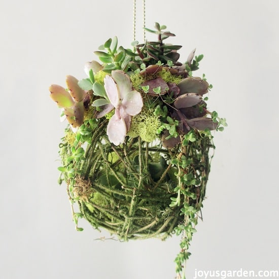A Different Way To Create A Succulent Kissing Ball