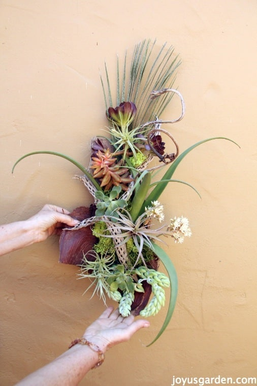 Creating Succulent Wall Art On Palm Debris