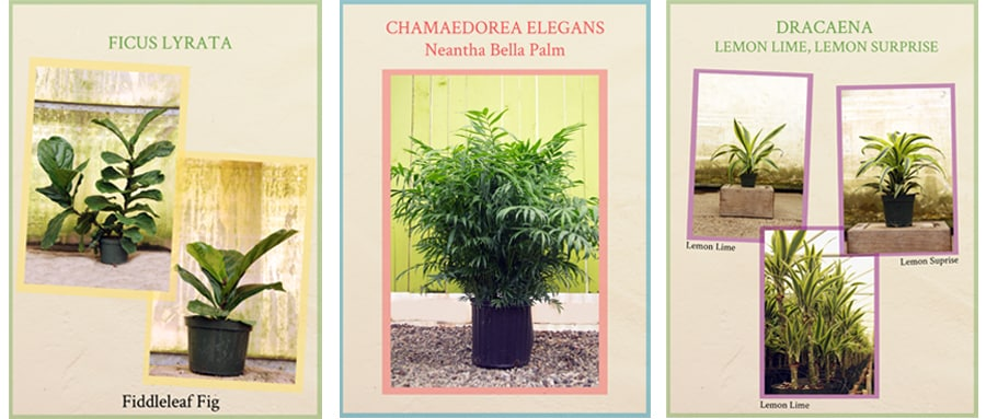 Some of the houseplants featured in the book