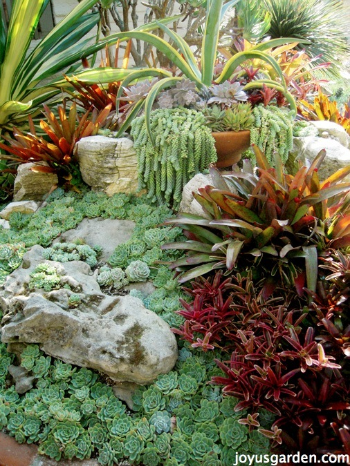 a beautiful garden showcasing succulents & bromeliads
