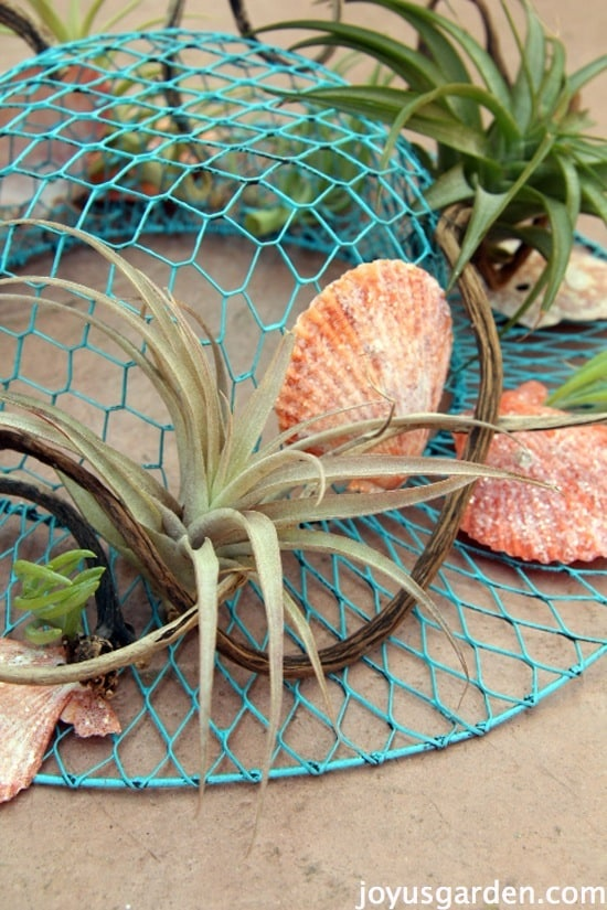 A Summer Centerpiece, Beachy Style