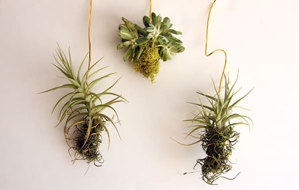 hang air plants, succulents & flowers