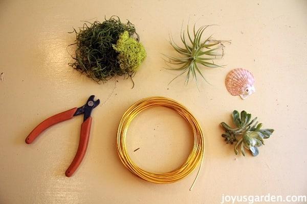 hang air plants, succulents & flowers