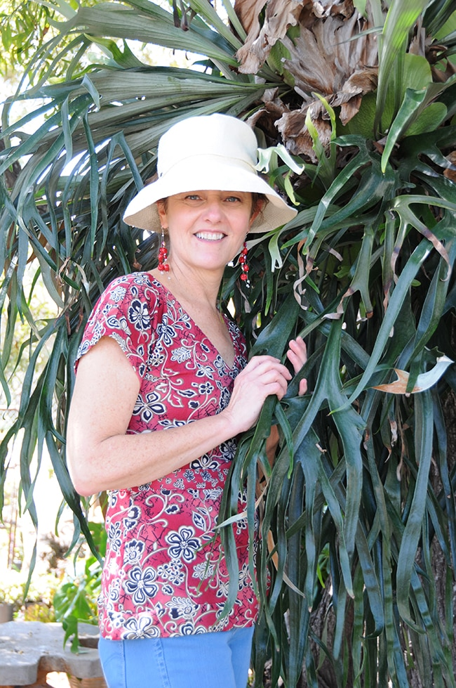 Staghorn Ferns Had Me At Hello
