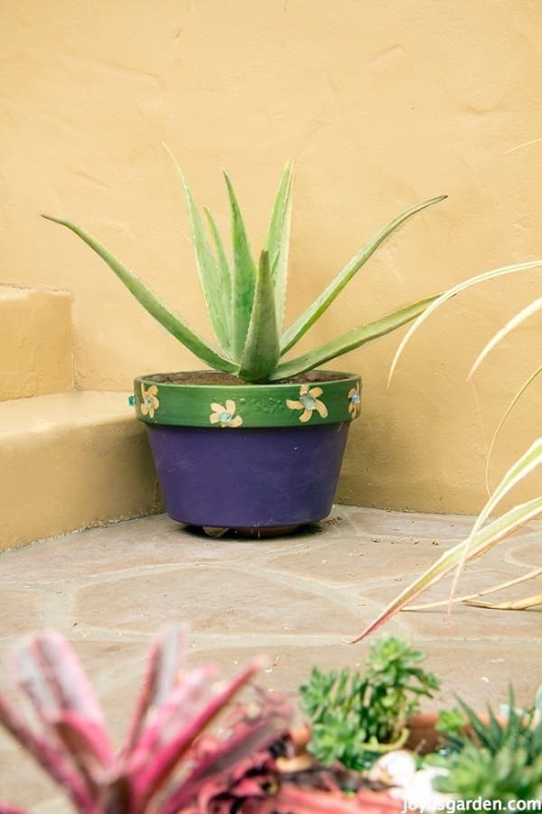 an aloe vera plant in a painted purple & green pot sits at the base of front porch steps