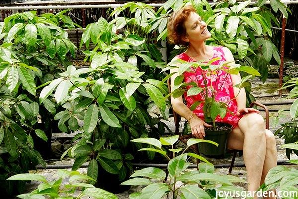 "Schefflera Amate: A Beautiful ""Jurassic Park"" Houseplant"
