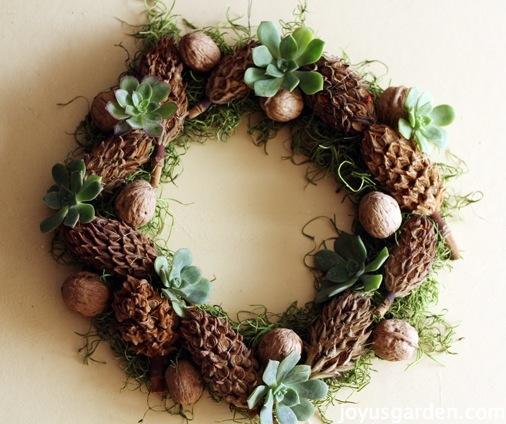 magnolia cone & aeonium wreath
