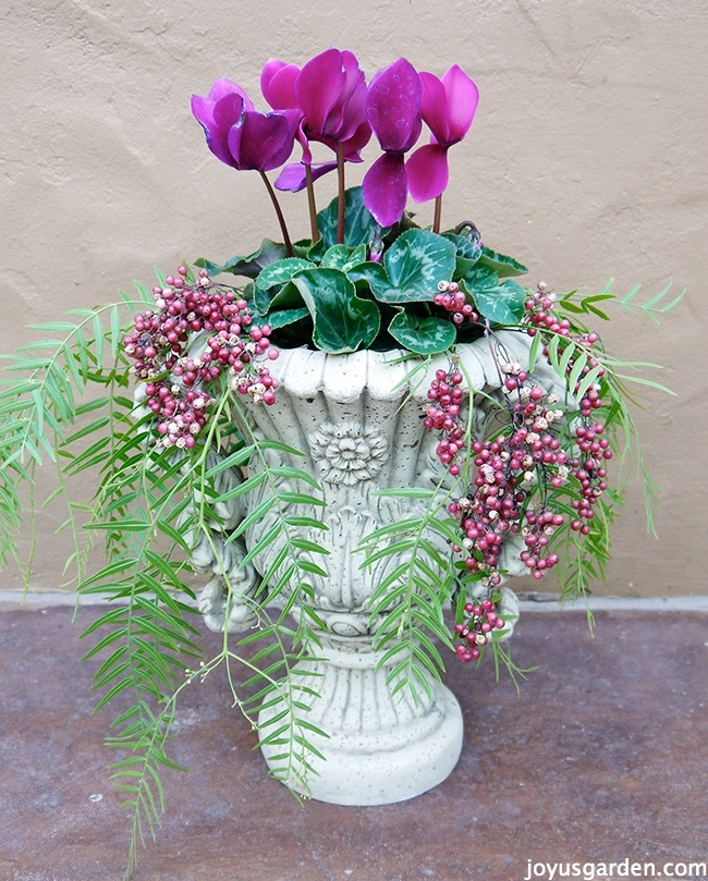 Orchids displayed in this urn
