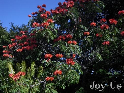 San Diego Botanic Garden flowers