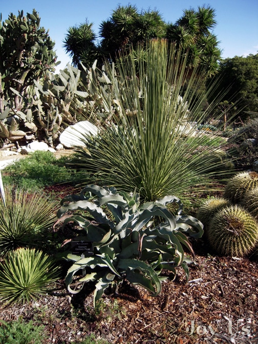 Gorgeous plants in South Coast Botanic Garden
