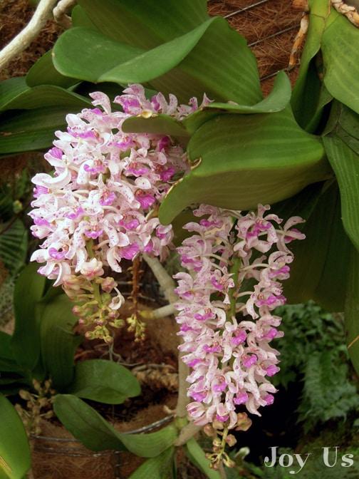 Flowers at Los Angeles County Arboretum & Botanic Garden