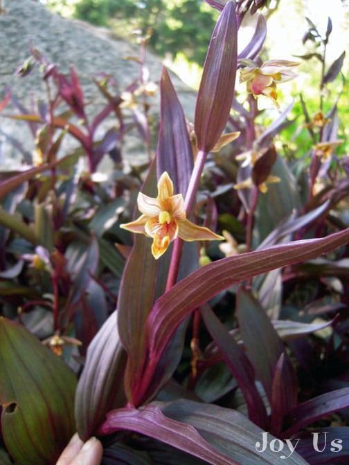 Gorgeous Santa Barbara Botanic Garden