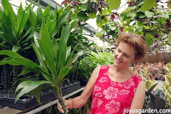 Nell holding a Dracaeana Janet Craig (aka Lisa) inside a green house