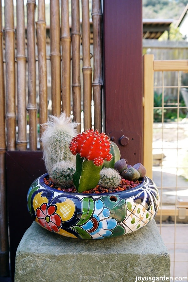 Painted pot with cacti