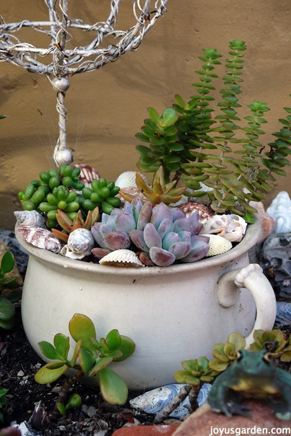 Succulents in an antique chamber pot