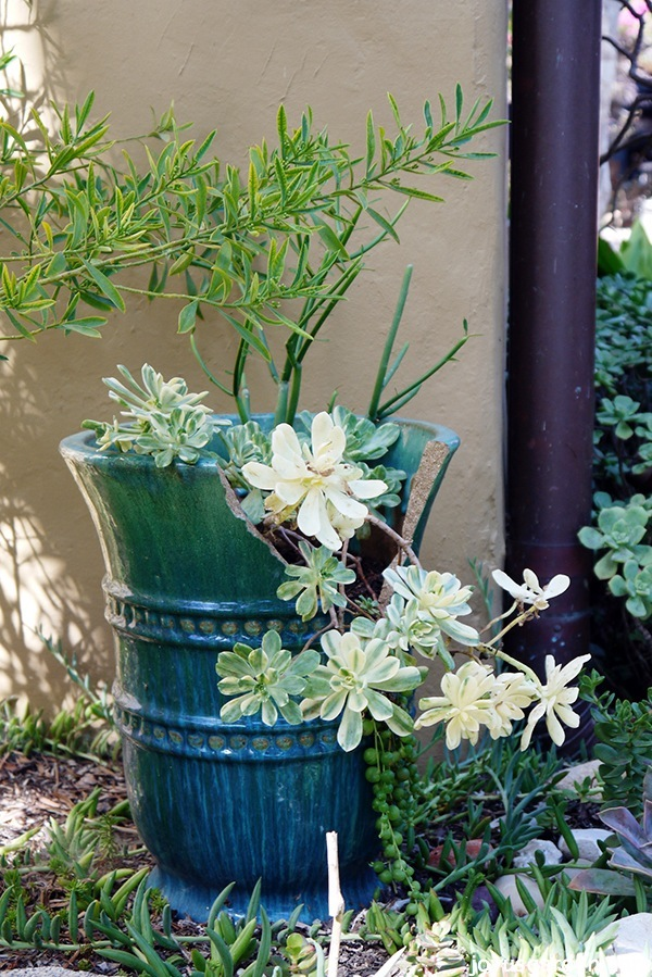 How to use a broken pot in your garden