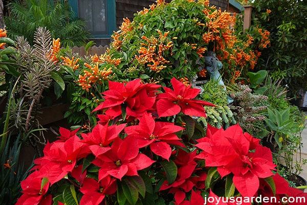 Flowery Things In January