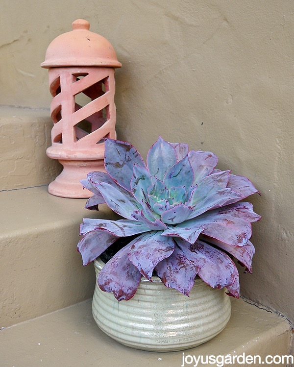 A Gorgeous Plant Deserves a Gorgeous Pot