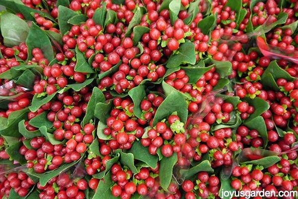 Arrangements of berries