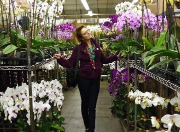 LA Flower District Blooming Plants