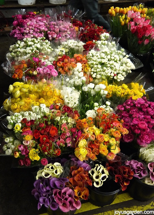 I Have Something to Show You: LA Flower District Cut Flowers