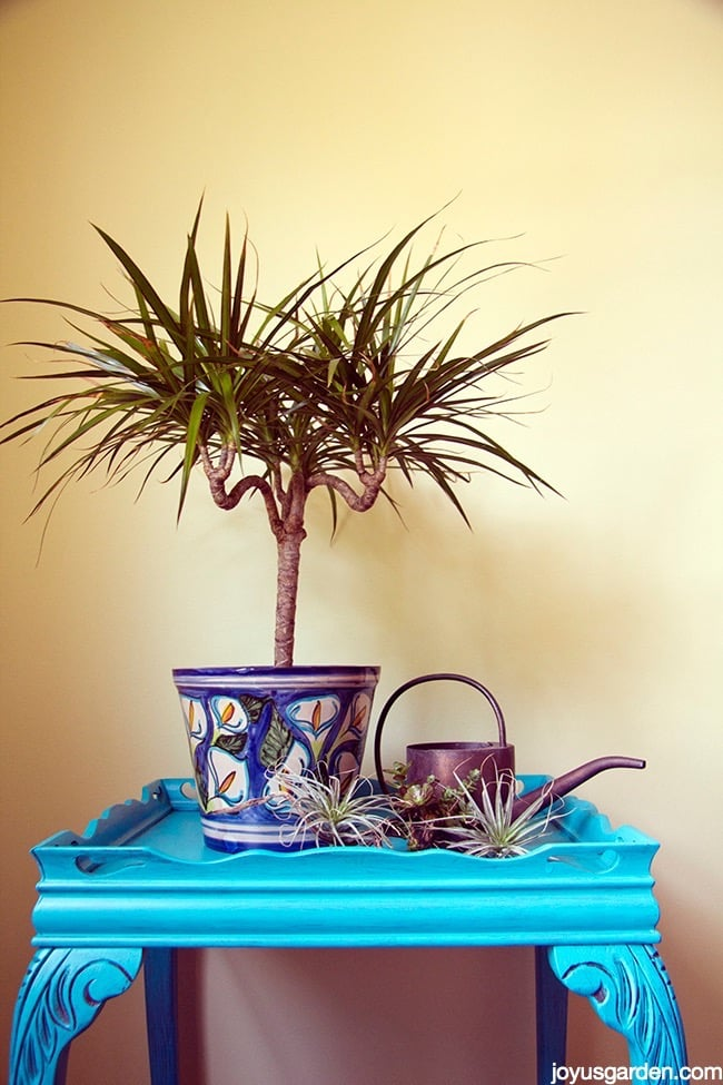 Houseplant Watering 101: Avoid Too Much Of A Good Thing