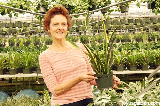 Nell with a snake plant