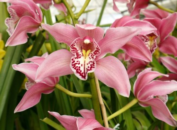 Tour An Orchid Grower's Greenhouses With Me