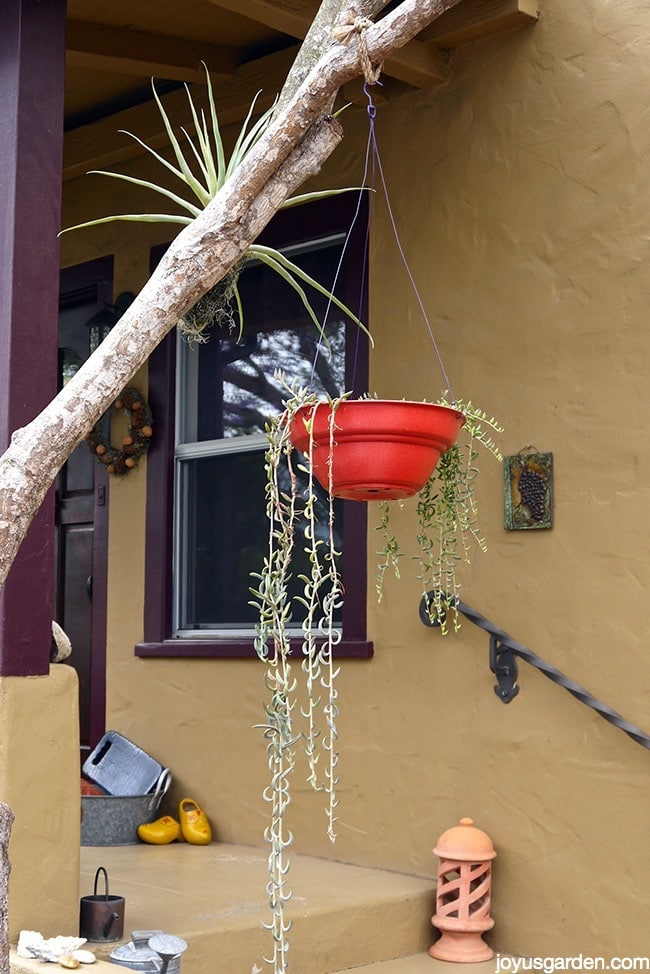The quest for the perfect hanging pot