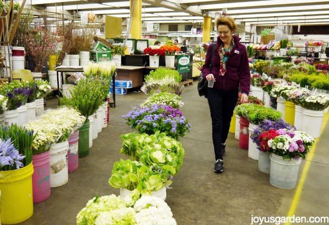 Nell shopping amidst cut flowers