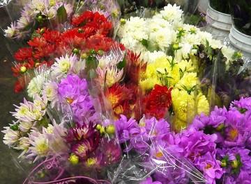 Los Angeles Flower District Cut Flowers
