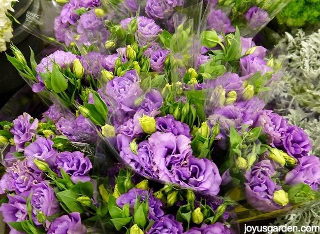 Beautiful purple cut flowers