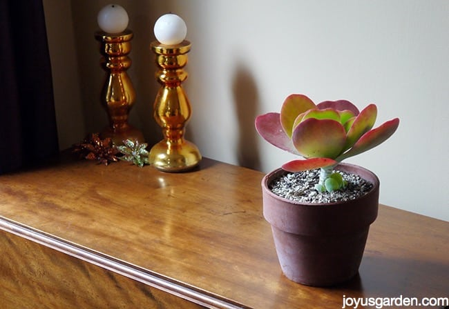 a paddle plant in a terra cotta pot sits on a table with 2 bright copper/gold candlesticks in the background