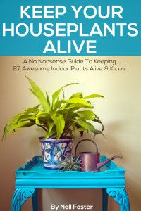 the cover of an ebook the text reads Keep Your Houseplants Alive a non nonsense guide to keeping 27 awesome plants alive & kickin'