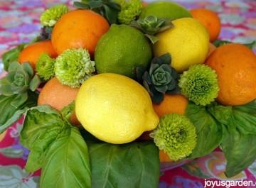 Citrus Centerpieces Created 2 Ways