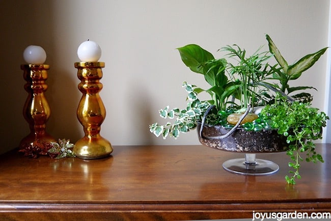 a dish garden in a footed glass bowl sits on a table next to 2 copper/gold candlesticks